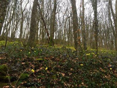 Forêt enchantée - labierebaladeuse.com